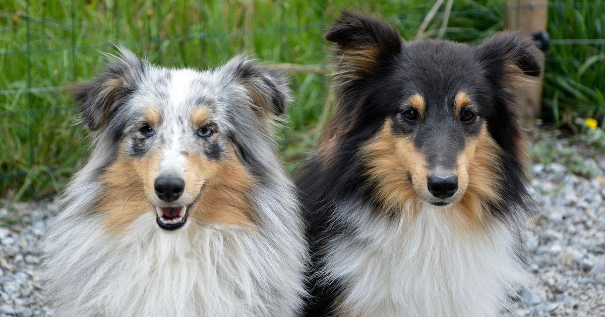Choisir un chien mâle ou femelle